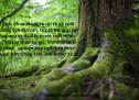 Lời Chúa Mỗi Ngày: Hê-bơ-rơ 12:2