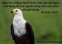 Lời Chúa Mỗi Ngày: Thi Thiên 103:5