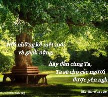 Lời Chúa Mỗi Ngày: Ma-thi-ơ 11:28