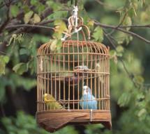 Truyện Ngắn: Chiếc Lồng Chim