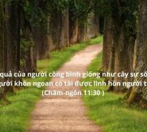 Lời Chúa Mỗi Ngày:  Châm Ngôn 11:30