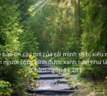 Lời Chúa Mỗi Ngày: Châm Ngôn 11:28
