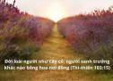 Lời Chúa Mỗi Ngày: Thi Thiên 105:35
