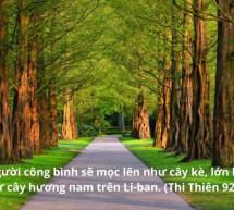 Lời Chúa Mỗi Ngày: Thi Thiên 93:2