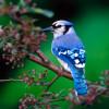 Thánh Ca: Chim Sẻ Chúa Vẫn Đoái Thương – His Eye Is On The Sparrow