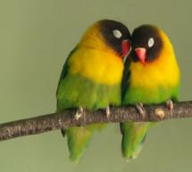 Đám Cưới Đôi Chim Hồng